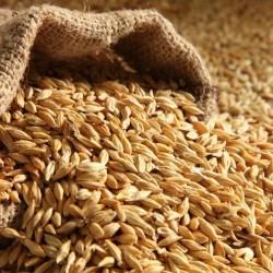 "Barley 25kg ""BEATTIE's"""