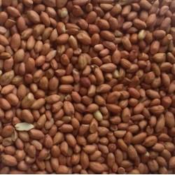 Wild Bird Peanuts 25kg...