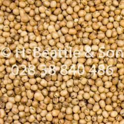 """Beans Tic """"New Crop"""" 25kg..."""