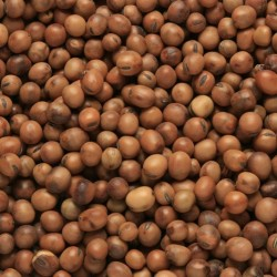 "BEATTIEs - Beans Tic ""1Yr..."