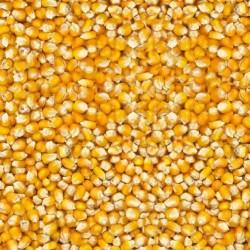BEATTIEs - Maize French...