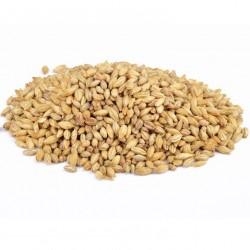 V-LAGA - Barley Extra - 25kg