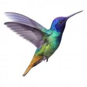 Nectar-Eating Birds
